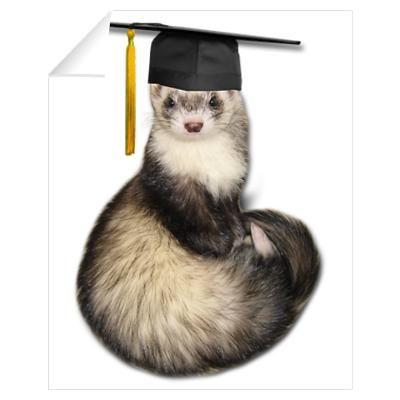 And now, a ferret in a mortar board hat! Hobbs, Fur Babies, Lol, Ferrets, Sprites, Graduation, Animals, Board, Animales