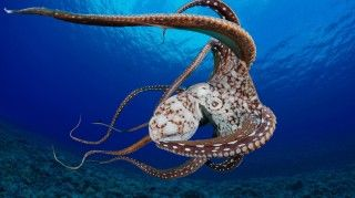 Stunning underwater photography by David Fleetham