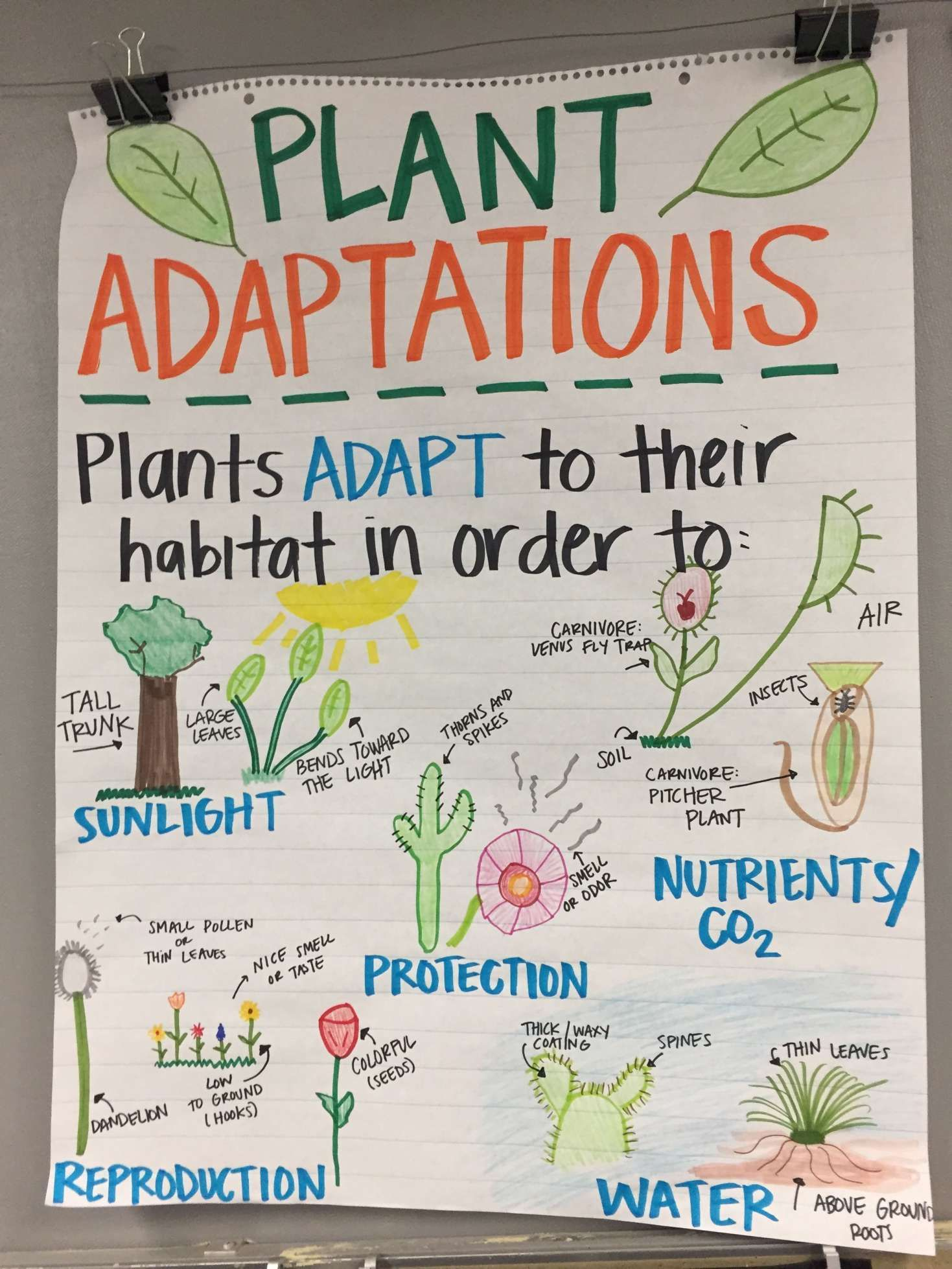 12 Plant Adaptation Worksheets 3Rd Grade   Science anchor charts [ 1958 x 1469 Pixel ]