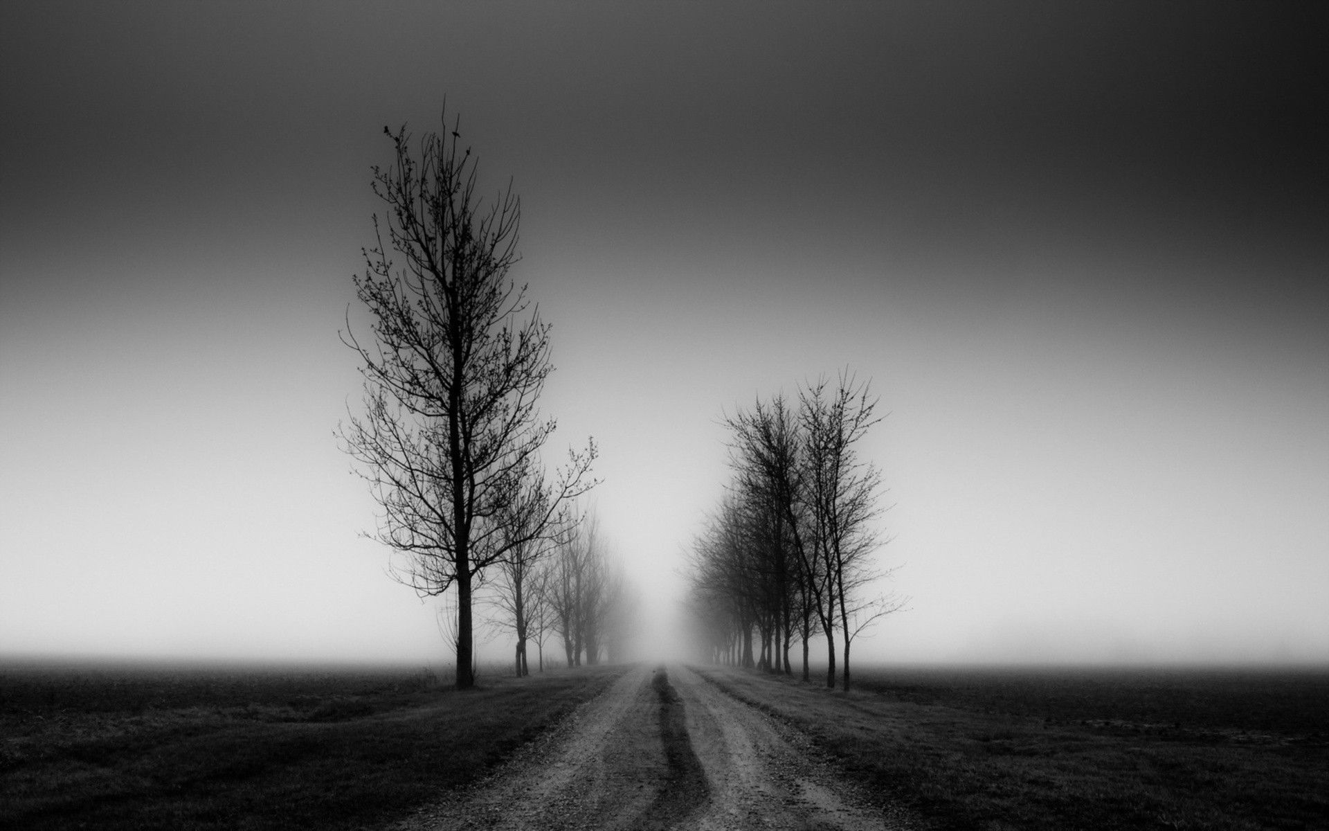 Natures Pathway Tree Wallpaper Black And White Black And White Tree Black And White Background
