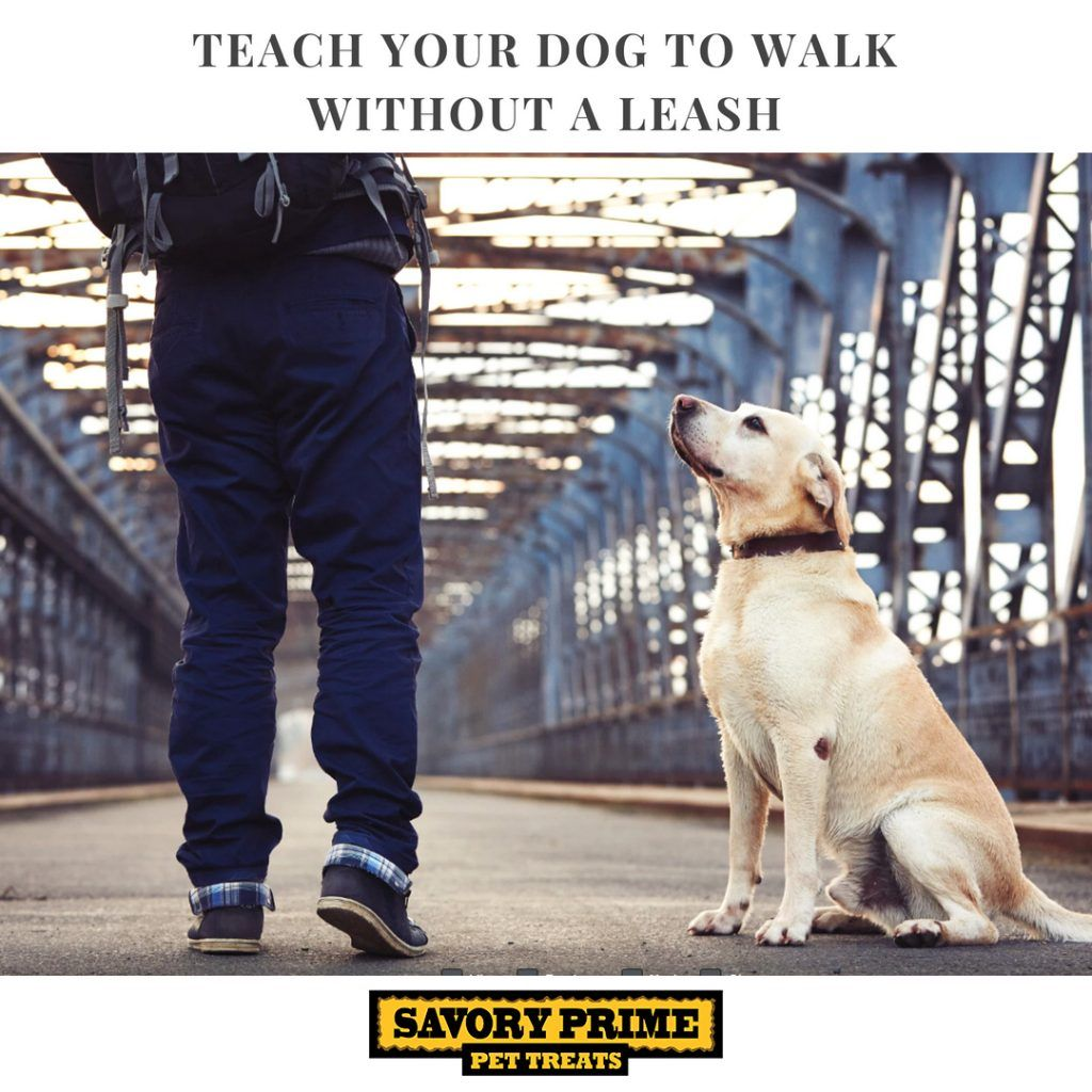 Teach Your Dog To Walk Without A Leash Dogs Your Dog Pet News