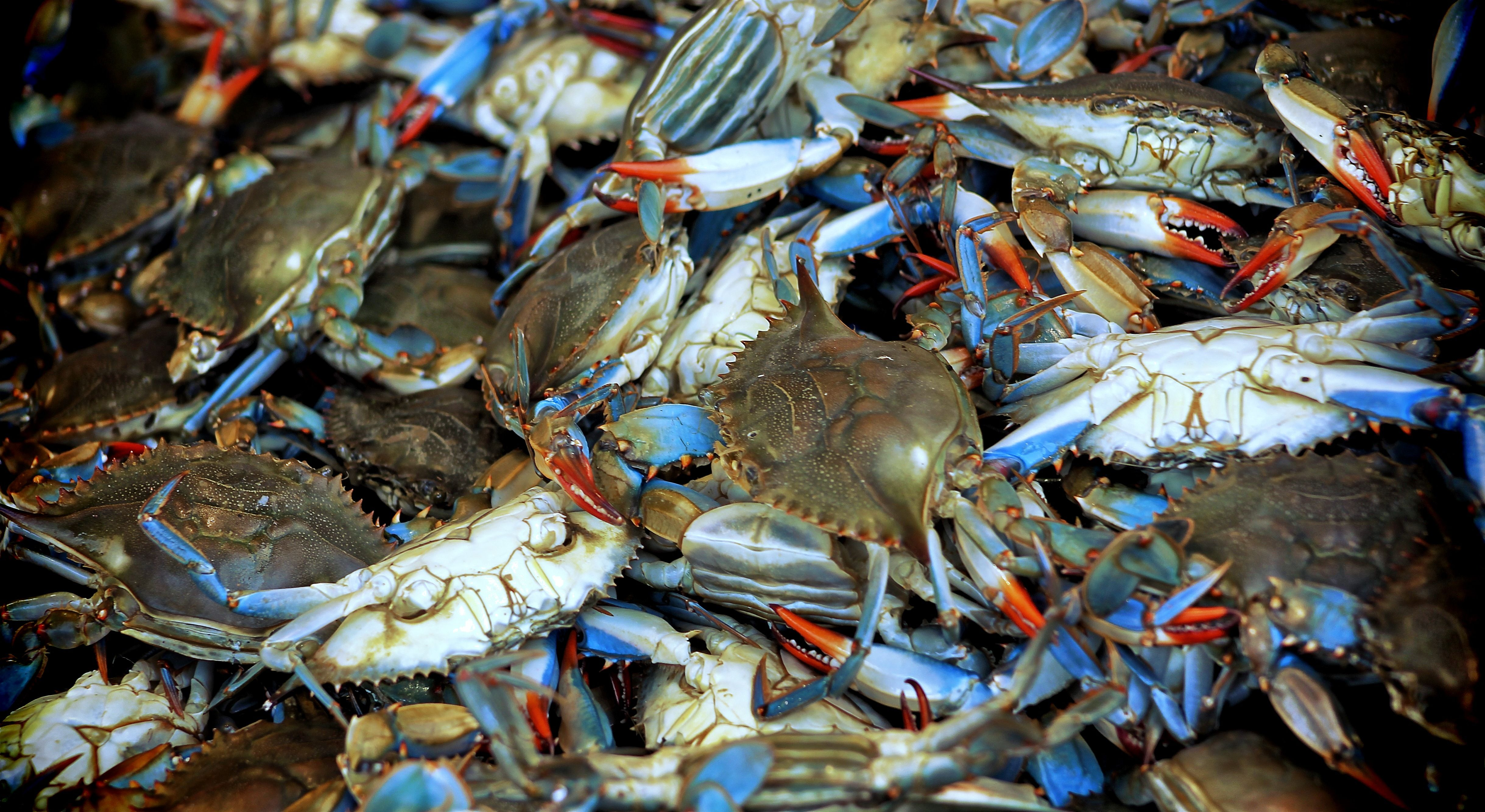 Maryland Blue Crabs Dc Waterfront Fish Market Maryland Blue Crab Crab Blue Crab