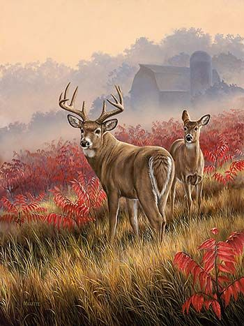 A593457065 Lifting Fog Whitetail Deer By Rosemary