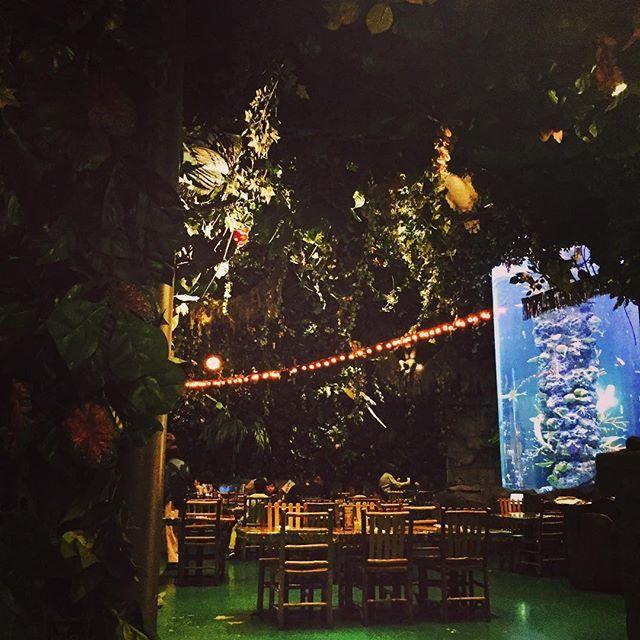 イクスピアリ ジャングル