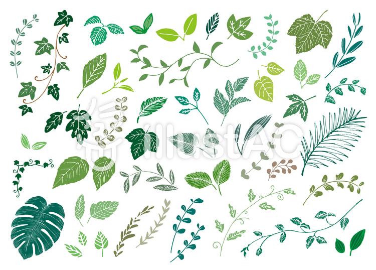 手書き葉っぱ色々カラーイラスト 葉っぱ, 手描きの花, きれい