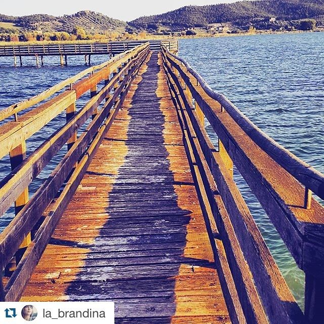 #Repost @la_brandina #oasilavalle #trasimenolake #lagotrasimeno #igersumbria #birdwatching #birdwatchers #landscape #naturelovers #natureza by trasimeno_lake