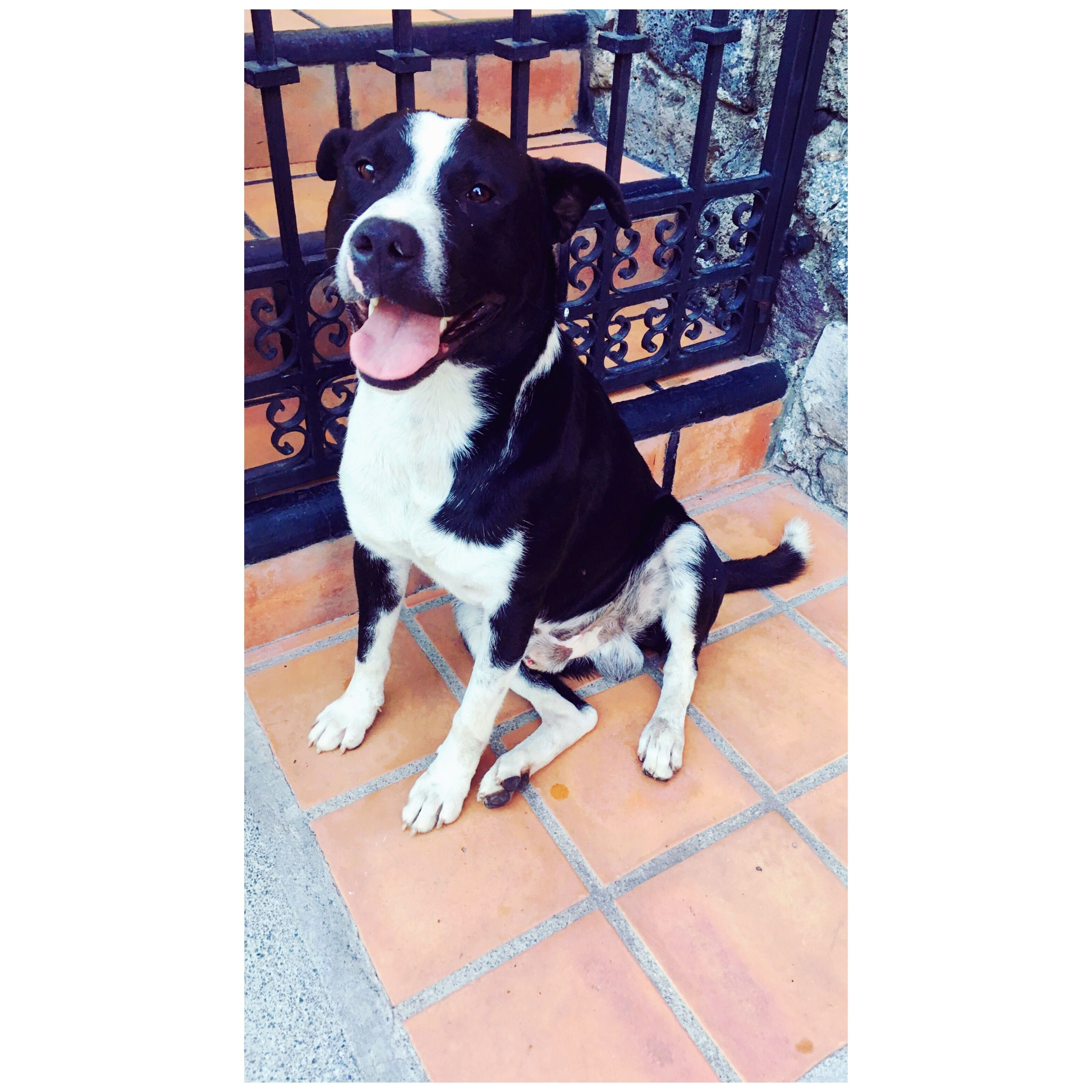 Meet Pancho! He has no family 😞 but at last he seems to be happy... 💔