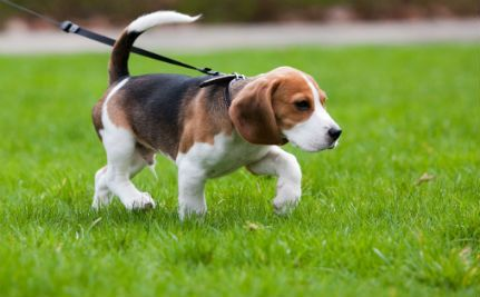 What Does Your Dog S Tail Wagging Really Mean Easiest Dogs To