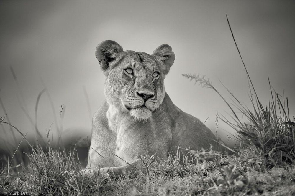 Massai Mara, 2015 Community picture, Hunt photos, Shot photo