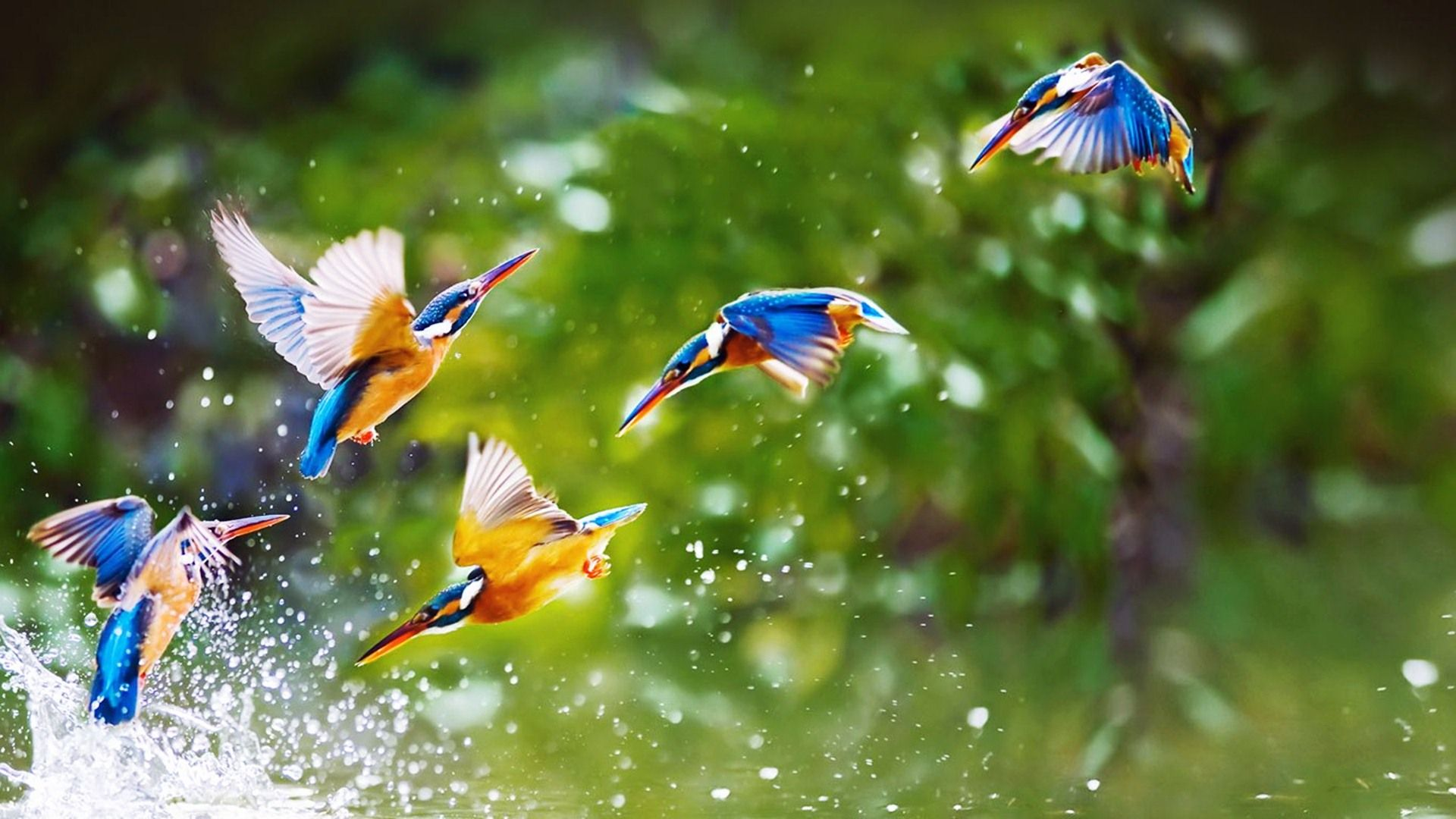 birds wallpapers hd pictures