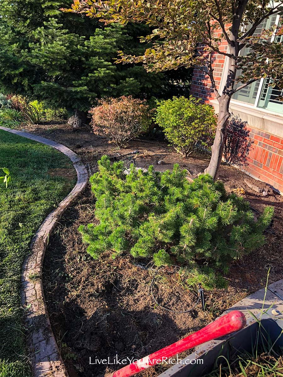 Maintenancefree weedless flower beds in 10 steps in 2020