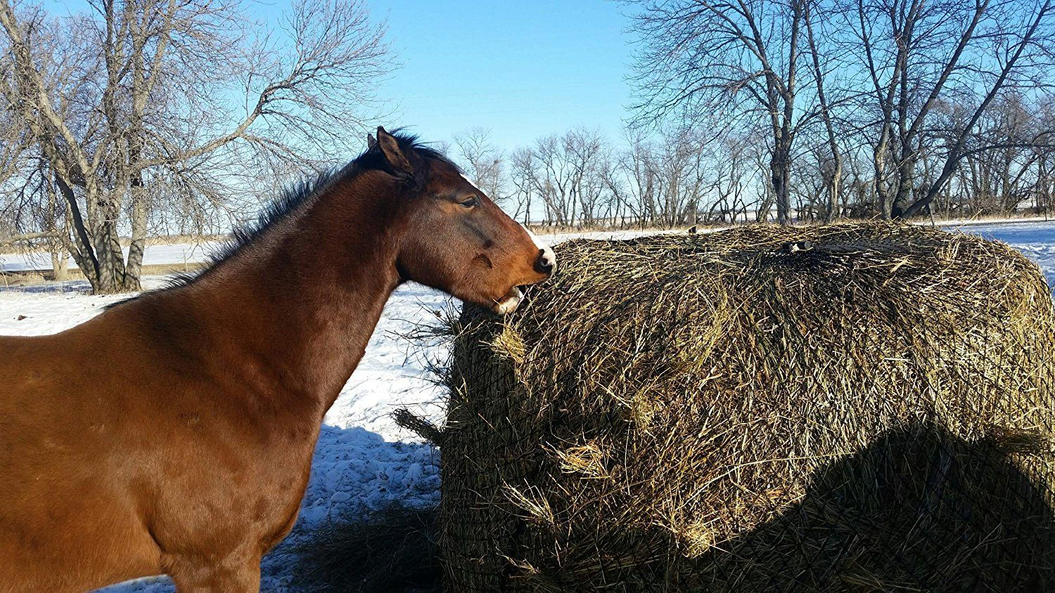 Need to try this!A slow feeder net for round bales! Save