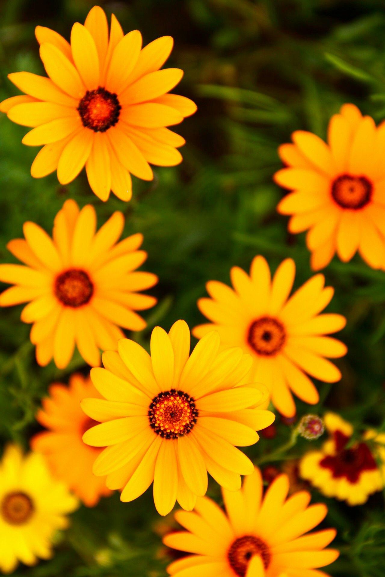 Fondos De Pantalla Hd Fondos De Pantalla Tumblr Flores Amarillas
