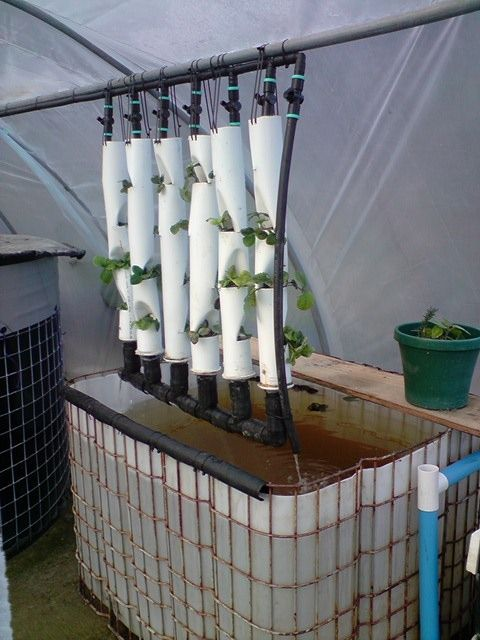 Delightful Aquaponic Strawberry Tower