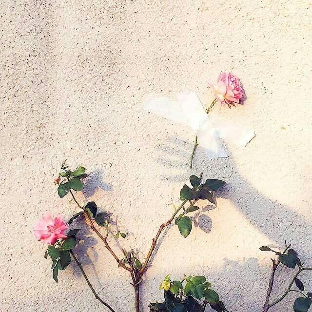 ي قال أن الفرق بين السعيد والتعيس حرف واحد السعيد يشكر أما التعيس يشكو Flower Aesthetic Flowers Peach Aesthetic