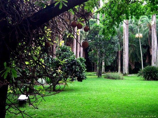 El jardín botánico es nuestro segundo pulmón de Caracas Posee una