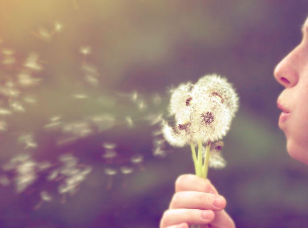 9 Haikus For Pollen Allergies Pollen Allergies How To Attract Customers Dandelion Wish