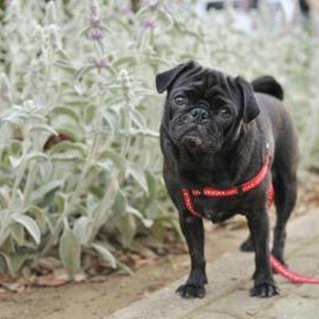 f40a33f5b388783a3e05b6d38bd1af0a - Plants That Repel Dogs From Gardens