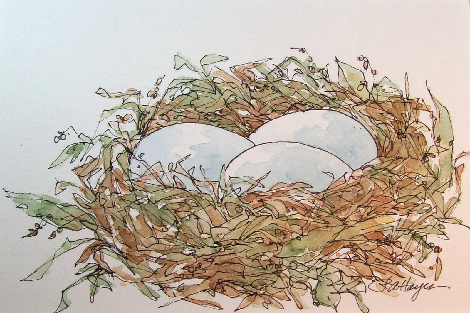 Bird S Nest Watercolor Bird Watercolor Painting Techniques