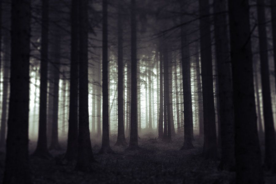 Scary Forest Scary Forest By Jeaneta On Deviantart Scary Woods Scary Photography Photo On Wood