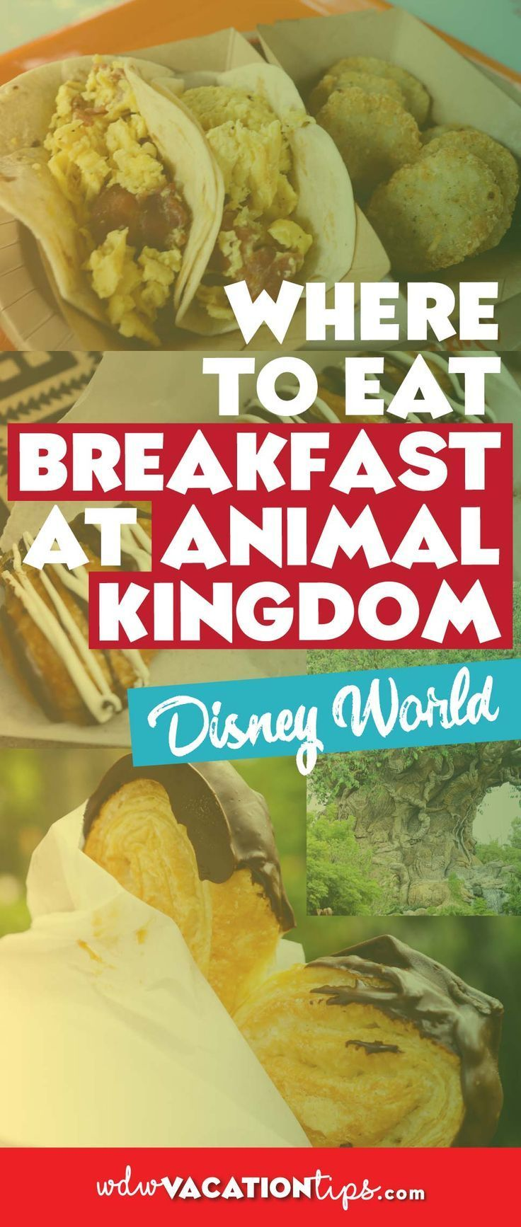 Where to Eat Breakfast at Disney's Animal Kingdom #animalkingdom