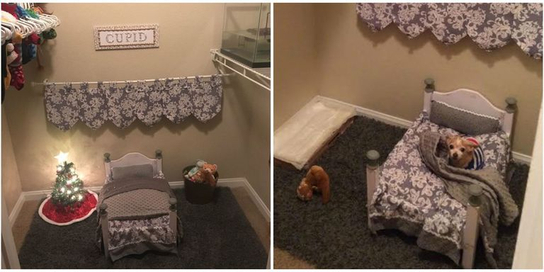 this dog mom turned her spare closet into an adorable bedroom for rh pinterest com