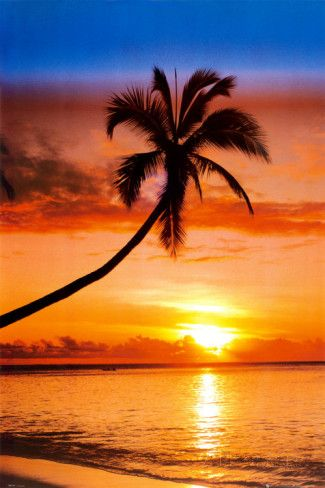 Sunset Palm Photo at AllPosters.com