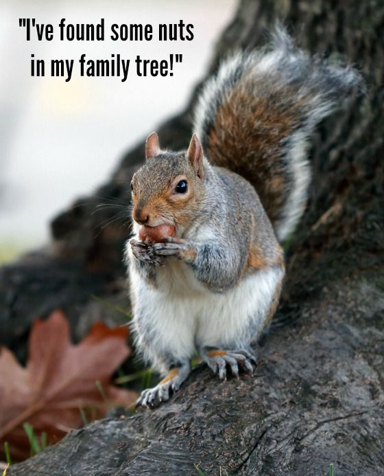 Fun Quote Genealogy I Ve Found Some Nuts In My Family
