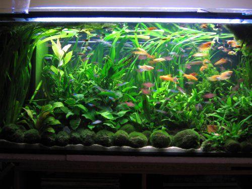 Community Tank Aquascape
