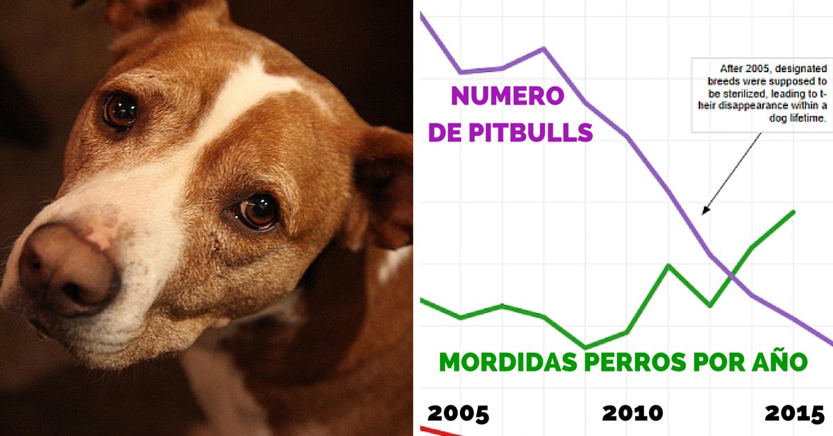 Ley desaparece pitbulls y aumenta número de mordidas de perro en ontario