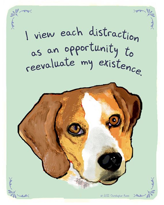 Distracted Beagle 5x7 Print Of Original By Tinyconfessions On Etsy