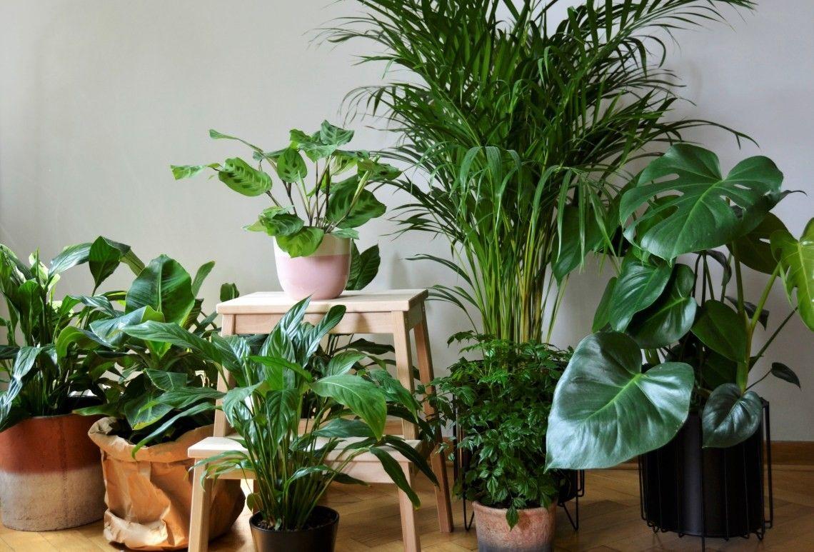 Rosliny Doniczkowe Plants