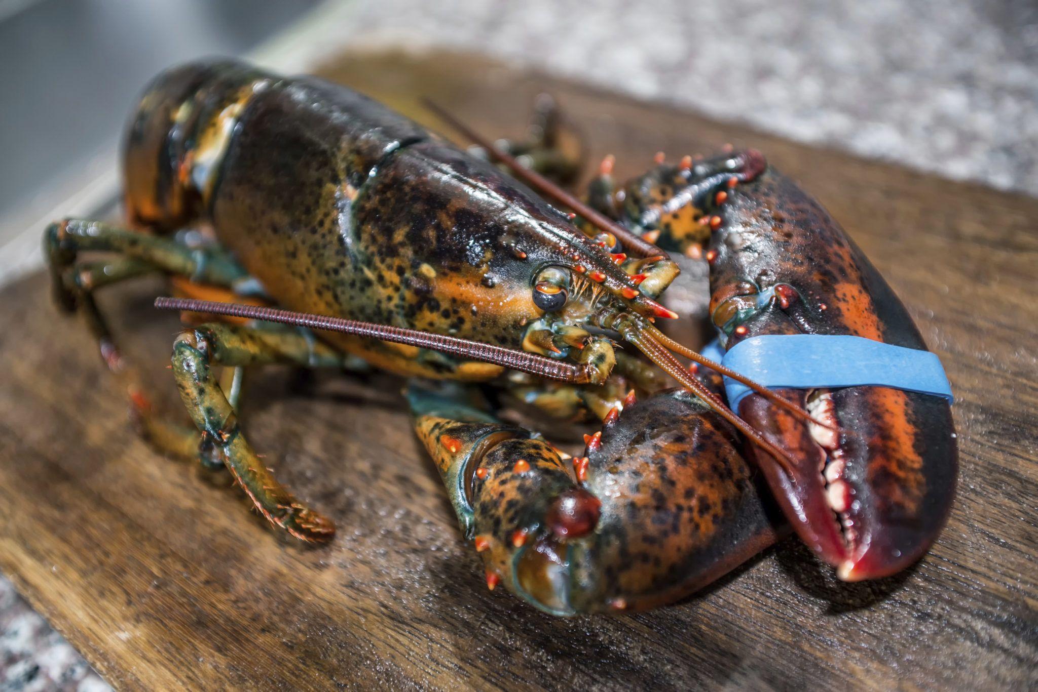Image result for lobster | lobster | Pinterest