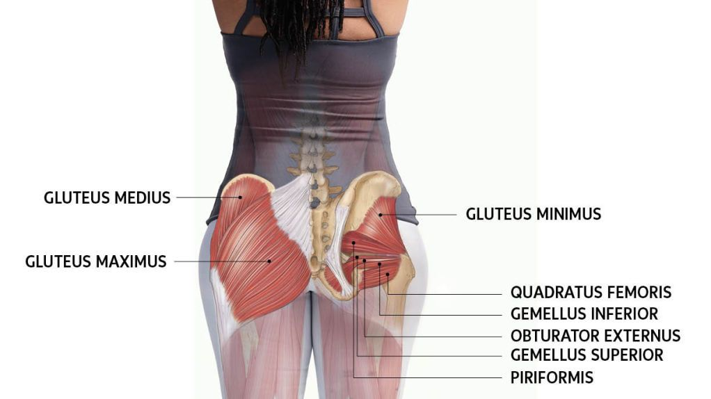 Anatomy 101: Get to Know Your Glutes | Yoga Journal | Yoga poses ...