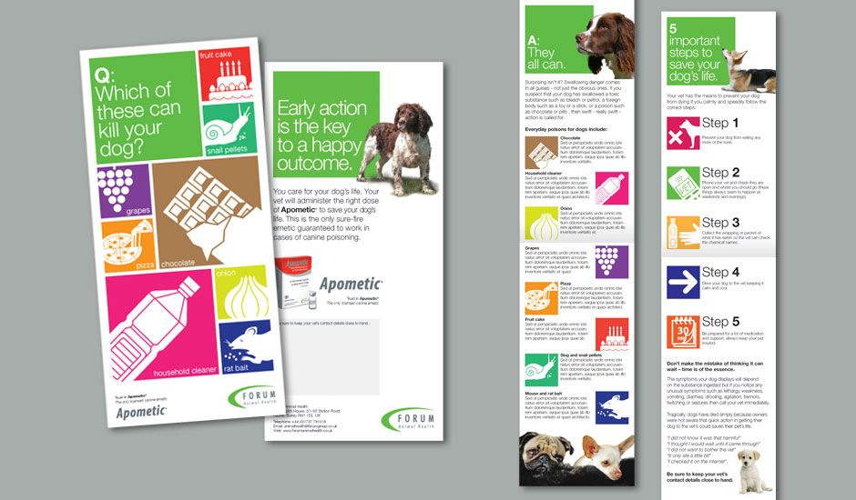 Design proposals for launch of canine emetic u0027Apometicu0027 from Forum - product flyer