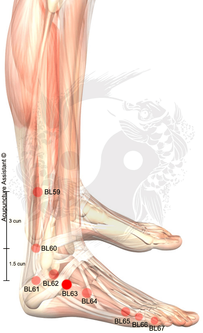 bl63 jinmen acupuncture point png meridians and reflexology