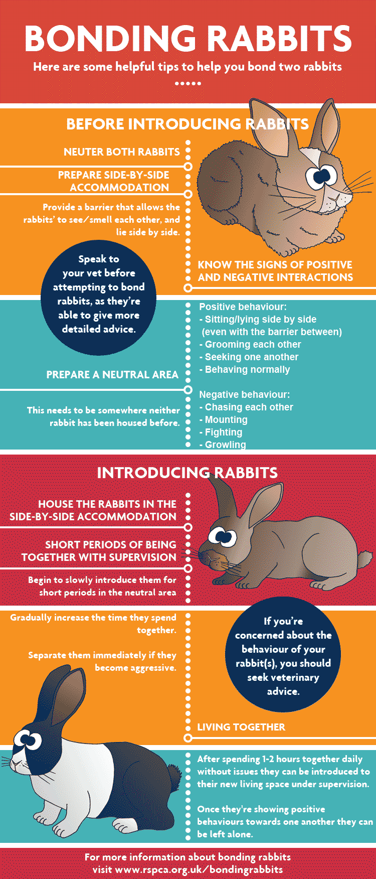 How to bond rabbits so they can live together - Bonding rabbits, Bunny cages, Pet bunny, Pet rabbit, Rabbit behavior, Rabbit care - Rabbit bonding tips and how to get them to live together  Find out what are the good signs your rabbits are getting along and making sure they don't fight