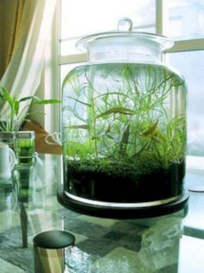 Nice creative diy indoor garden ideas aboutruth
