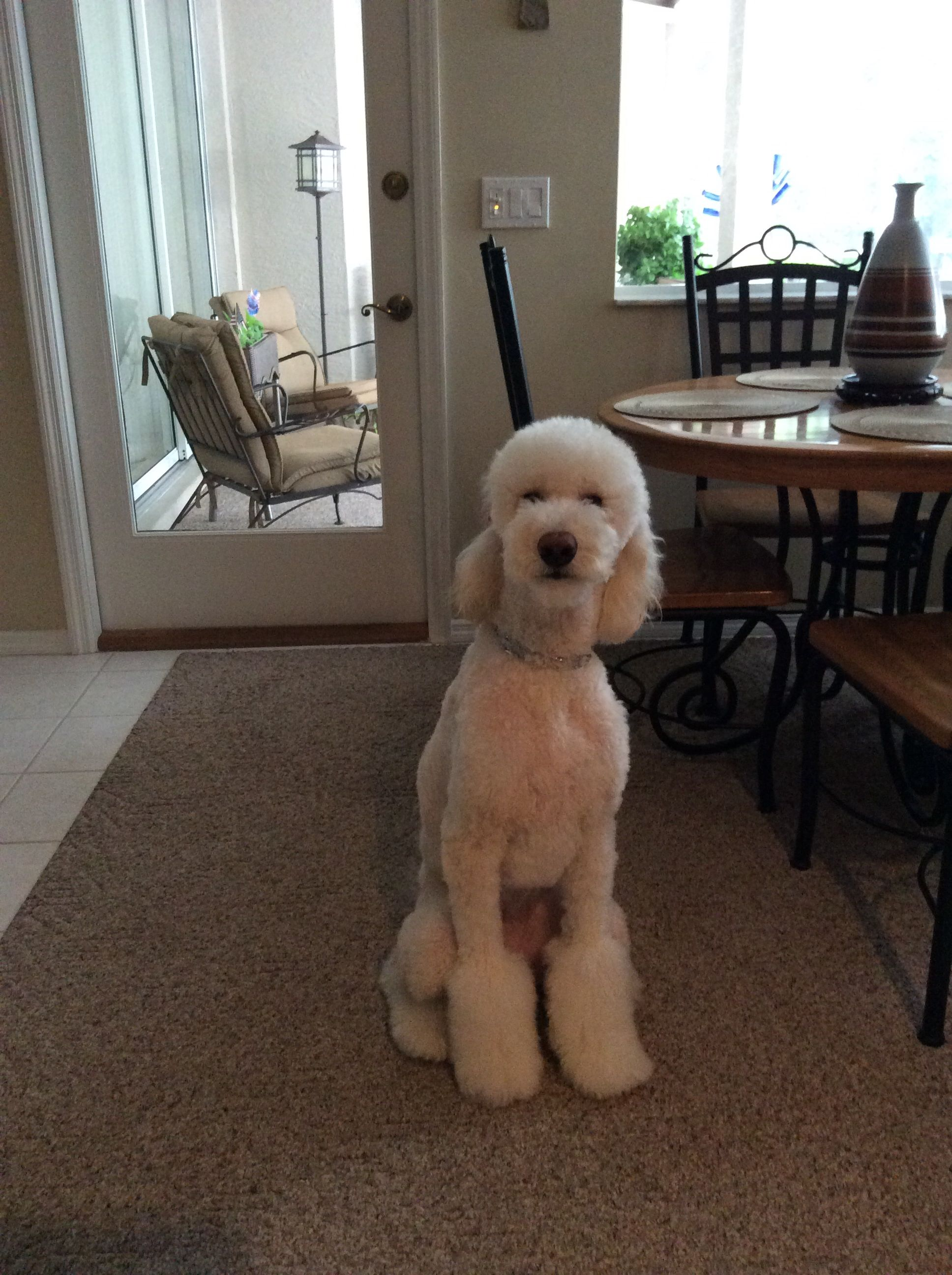 Pin on Goldendoodle Love