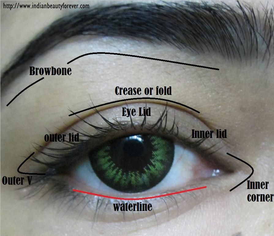 tutorial eye diagram eye makeup terms and parts of eyes with diagram | color ...