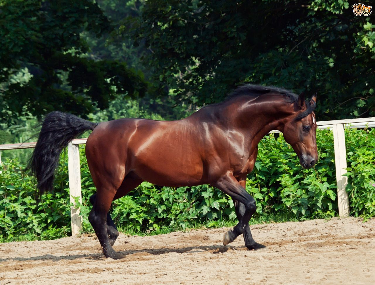 настоящее картинки самая быстрая лошадь в мире более