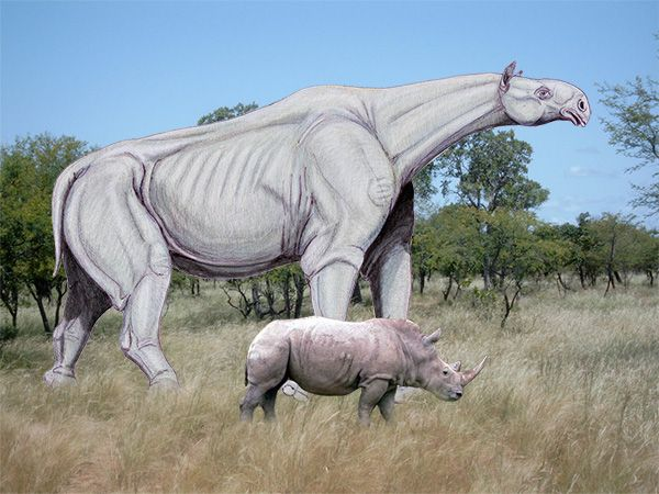 Paraceratherium vs Rhino | Prehistoric animals, Ancient ...