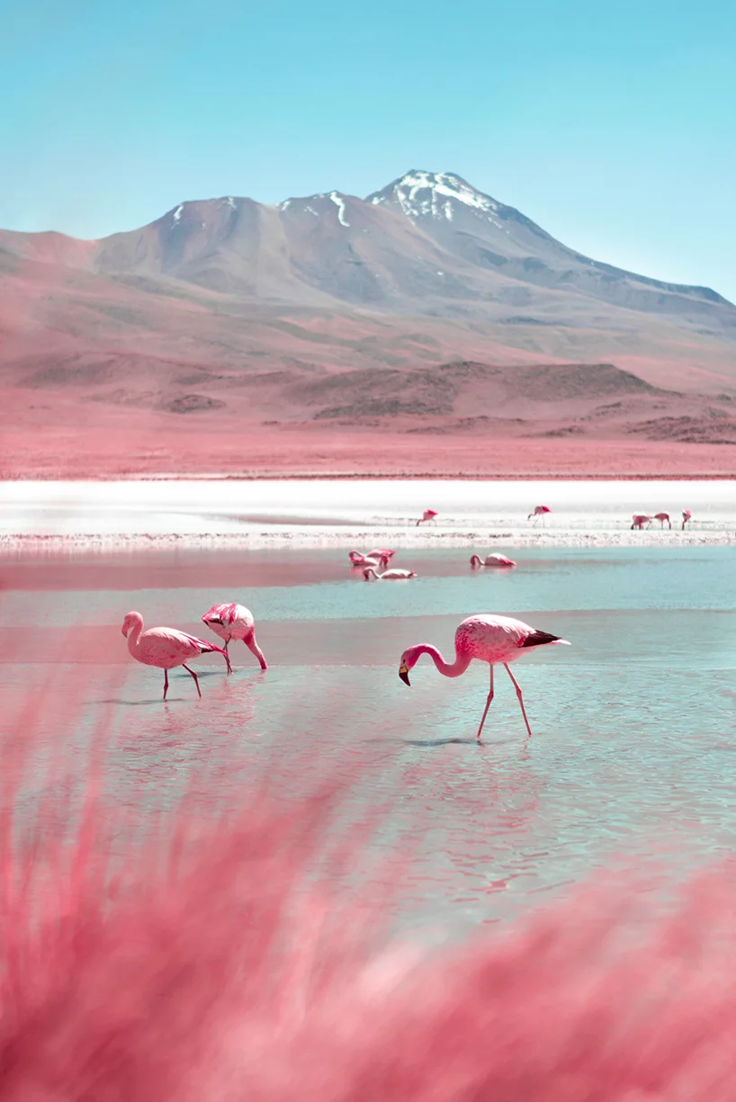 Paolo Pettigiani S Infrared Photography Captures Bolivia In All Pink In 2020 Infrared Photography Flamingo Pictures Nature Photography