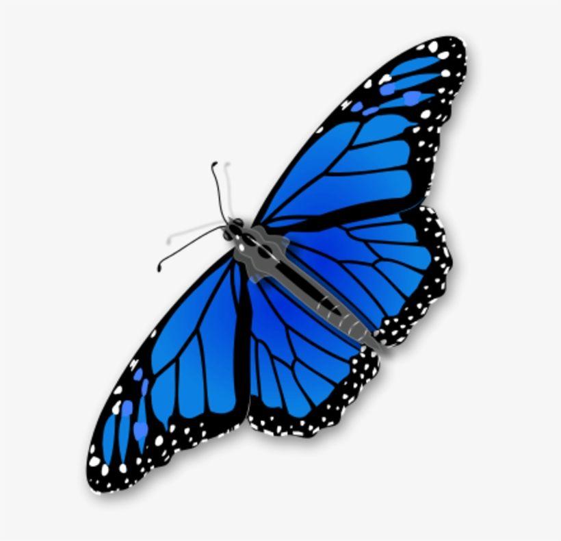 Blue Monarch Butterfly Png Monarch Butterfly Blue Morpho Butterfly Most Beautiful Butterfly