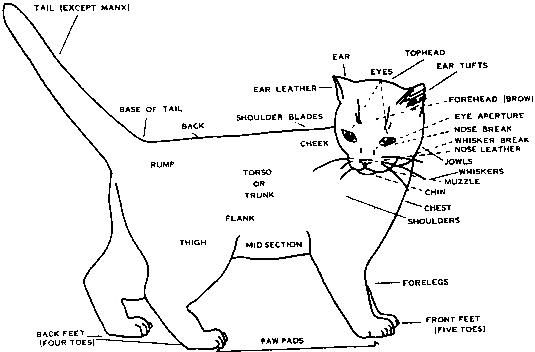 cat diagram taking in a stray cat or