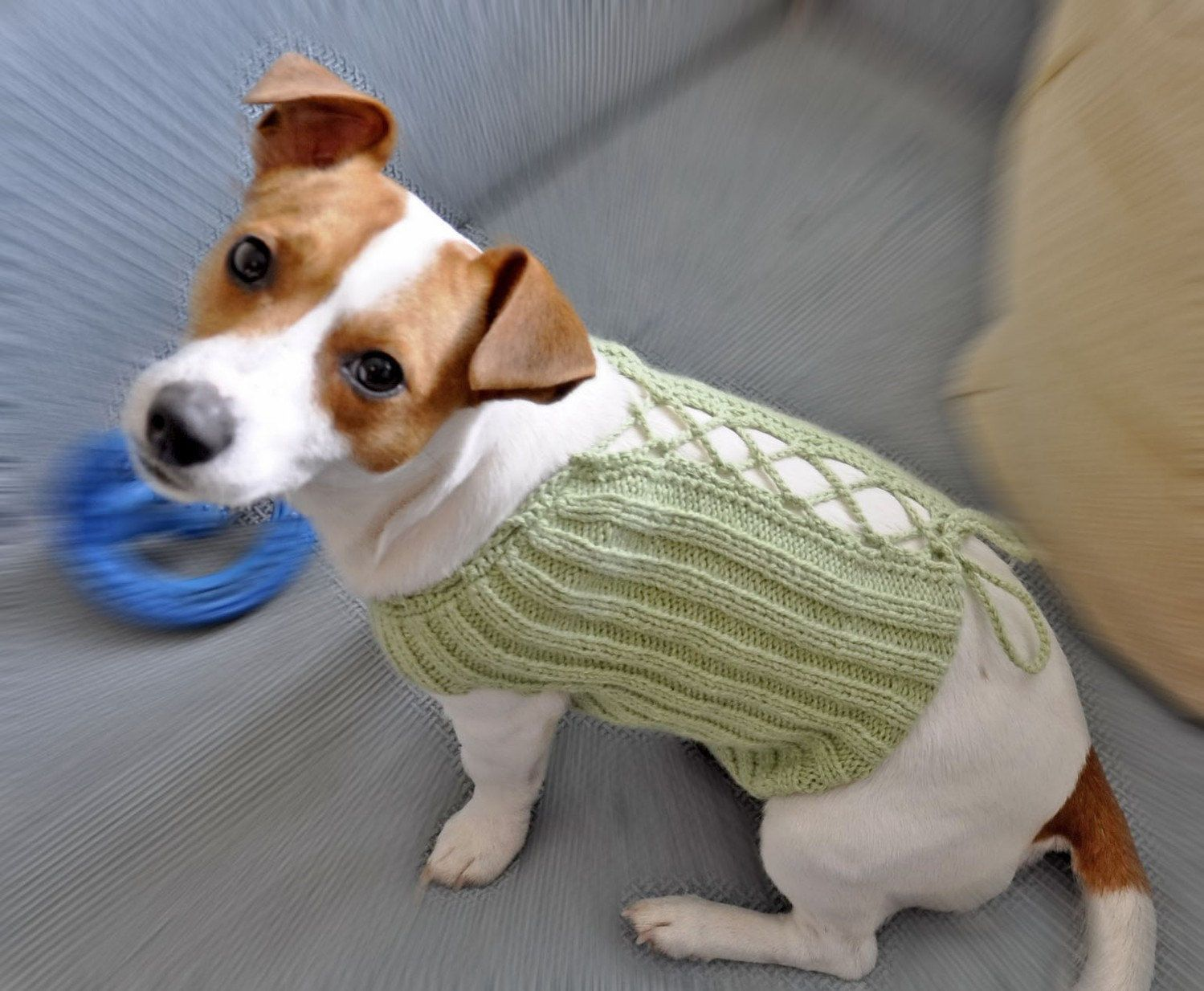 Knitting Dog Clothes : Knit and crochet dog sweater pattern pdf format