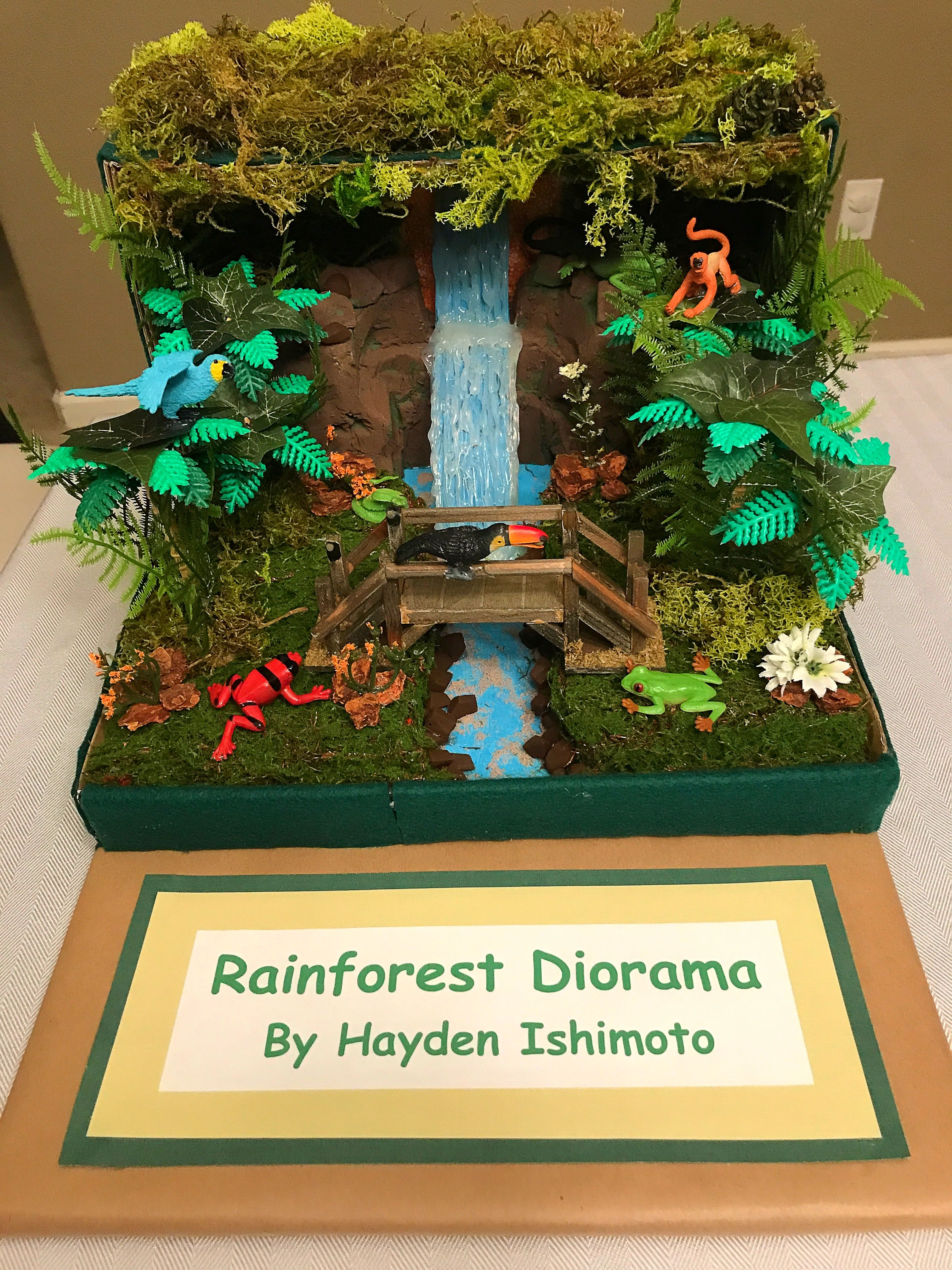 Hayden S 3rd Grade Rainforest Diorama With Images
