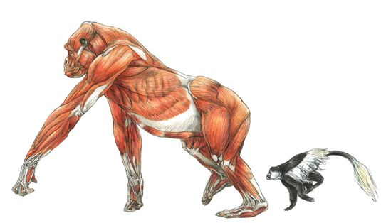 Review: Science of Creature Design | Anatomía animal, Anatomía y Simio