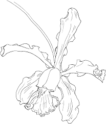 Hand Drawn Cattleya Orchid Flower Pattern Background In 2020 Orchid Drawing Flower Sketches Cattleya Orchid