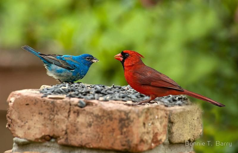 Oiseaux et couleurs